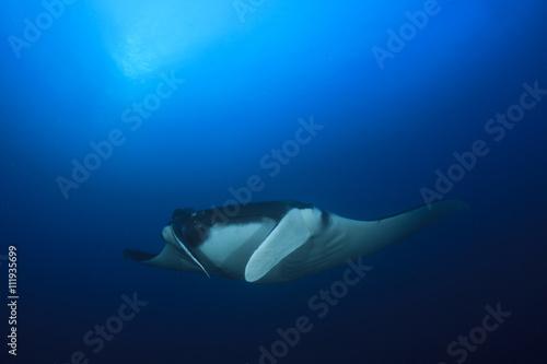 Aluminium Schipbreuk Manta Ray underwater in ocean