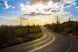 Saguaro National Park - 111949210