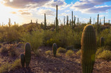 Saguaro National Park - 111949230