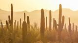 Saguaro National Park - 111949263