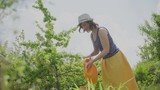 the woman in the garden watering the plants from a watering can