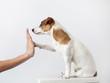 Dog greeting and human