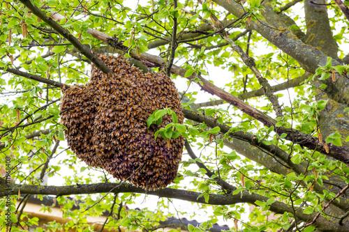Fotobehang Bee Drone of bees