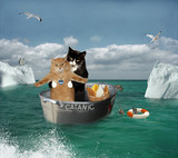 Two cats are traveling by a basin.