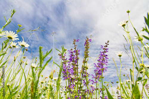 Panel Szklany Natürliche Wiese mit Blumen - Froschperspektive