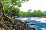 nehir su kenarında büyük yaşlı çınar ağaçları
