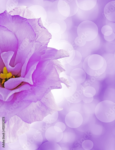 Foto op Canvas Lilac Floral background with beautiful flowers and lights