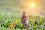 bird on grass watching the sun