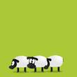 Schafe stehen in der Schlange
