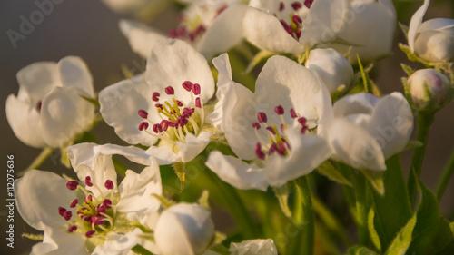 Zdjęcia na płótnie, fototapety, obrazy : Макросъёмка цветов и улиток
