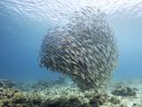 Unterwasser - Riff - Fisch - Schwarm - Tauchen - Curacao - Karibik