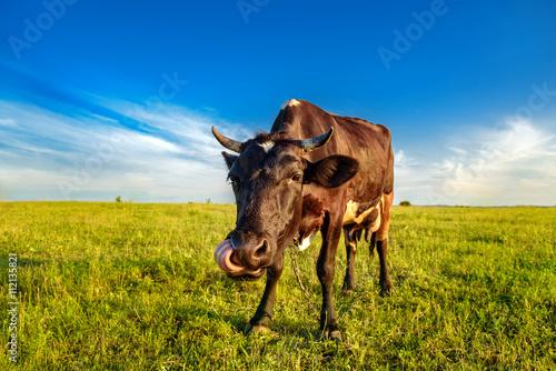 Aluminium Cow on a meadow