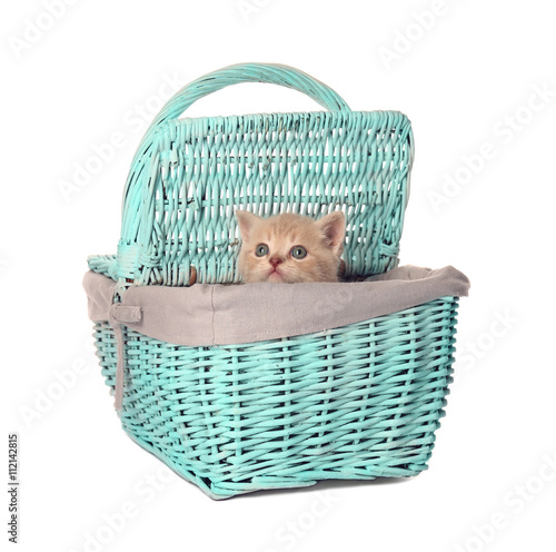 Small cute kitten in wicker basket, isolated on white