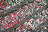 Petali di rosa rossa sui gradini della chiesa - 112165633