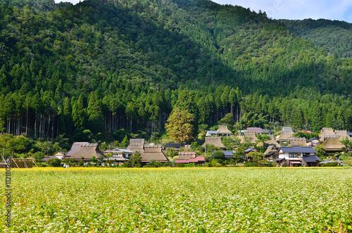 秋の田圃 美山の蕎麦の花 京都