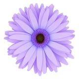 top view of purple flower isolated on white background. 3d illus
