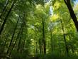 Leinwanddruck Bild - Buchenwald, Nationalpark, Kellerwald-Edersee, Nordhessen