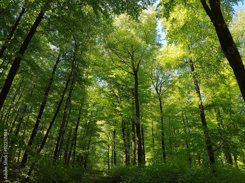 Leinwanddruck Bild Buchenwald, Nationalpark, Kellerwald-Edersee, Nordhessen