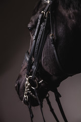 Black horse head with equipment closeup © lenina11only