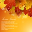 Bright beautiful leaves with autumnal abstract backgrounds