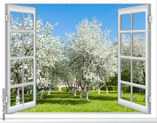 Fototapeta view window flowering tree