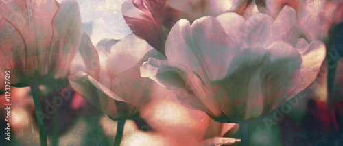 Obraz tinted tulips texture concept