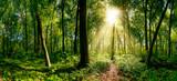 Weg im Wald beleuchtet von goldenen Sonnenstrahlen - 112337628
