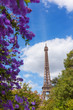 Eiffel Tower through beautiful spring violet flower bushes in Paris France at sunny day