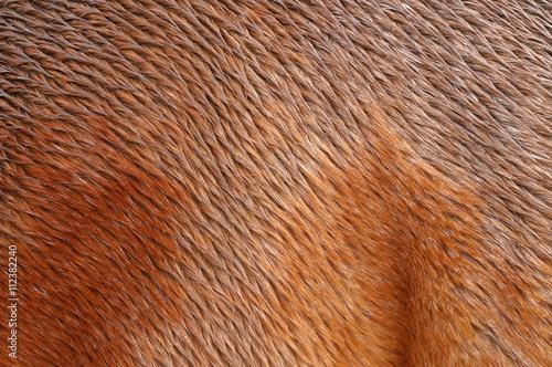 Zdjęcia na płótnie, fototapety, obrazy : Piel de caballo mojado
