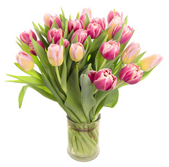 Bunch of tulips on white