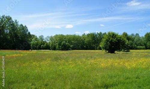 Fototapeta A colourful flower meadow.