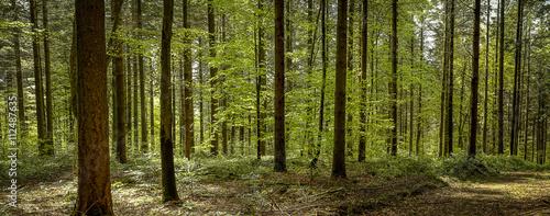 Foto Murales panorama sous les bois