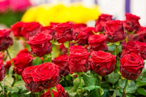Zdjęcia na płótnie, fototapety, obrazy : Bouquet of red roses