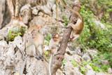 Cute wild monkey
