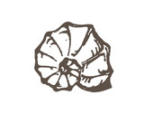 Grunge seashell sketch