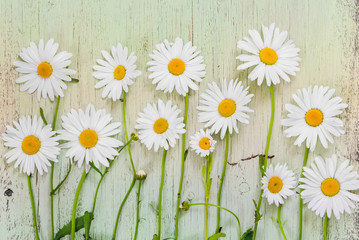 Chamomile flowers on light wooden rustic background. Flat lay composition. Top view.