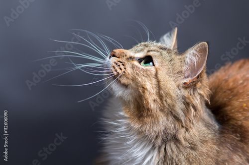 portrait of a beautiful cat
