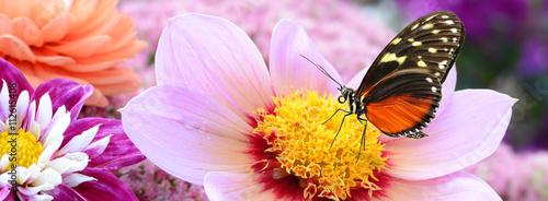 Fotobehang Purper Schmetterling 210