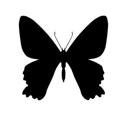 Silhouette of butterfly, isolated on white, vector illustration