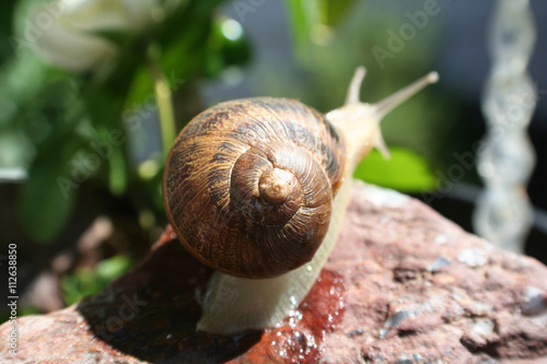 Poster Snail Stock Photo High Quality