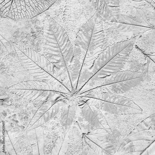 marks of leaf on gay concrete background © prapann
