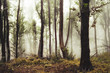 natural forest in mist