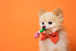 funny litllte dog at orange background