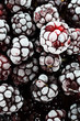 Frozen Blackberries Extreme shallow depth of field.