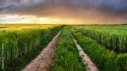 Field nature landscape at sunset with path
