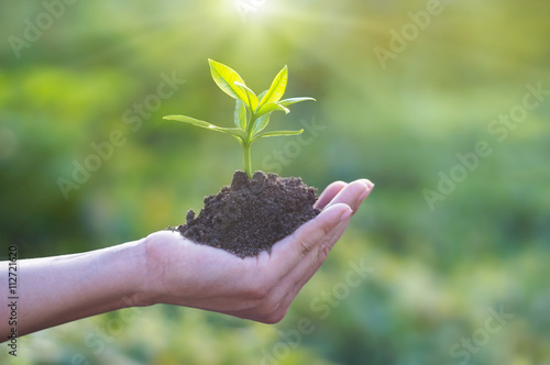 Human hand holding young plant with soil on nature background, environment concept