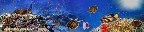 podwodna-panorama-z-zolwiem-rafa-koralowa-i-fi