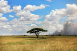 Lonely tree in the African savanna