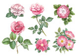 Fototapety Watercolor illustrations of rose flowers