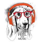 Obraz psa Basset Hound portret w słuchawkach.